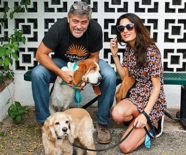 George and Amal Clooney adopt a rescue dog!