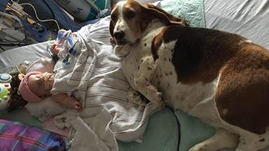 Family dogs won't leave dying baby's side