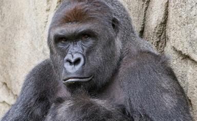 Mum defends Cincinnati Zoo incident