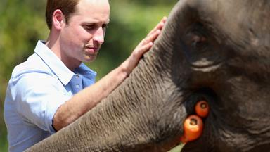 Prince William speaks out against illegal wildlife trade