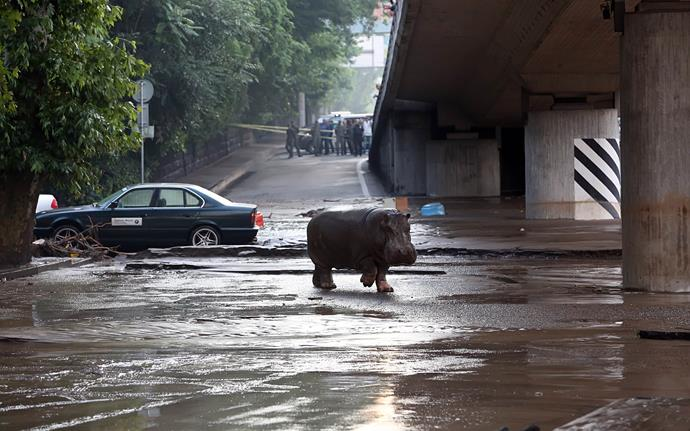 As zoo animals roam the flooded streets, civilians have been urged to stay inside.