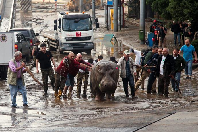 The flooding rose all the way to the top of some zoo enclosures, drowning some of the animals and sweeping others out into the streets.