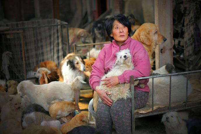 Yang Xiaoyun, a 65-year-old retired school teacher, was photographed rescuing the dogs in cages – many obviously kidnapped pets as they still had their collars on.