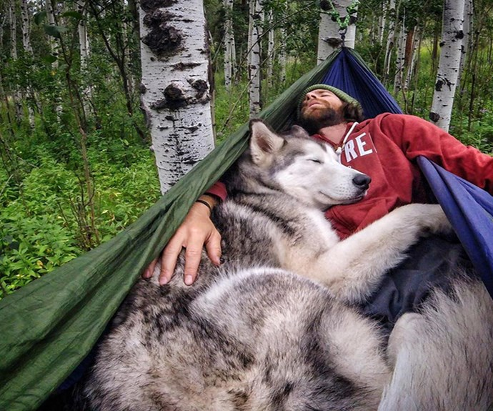 """Meet Loki the part husky, part artic wolf, part malamute who is arguably the most adventurous dog on Instagram. **PHOTO CREDIT: [Instagram/loki_the_wolfdog](https://instagram.com/loki_the_wolfdog/ target=""""_blank"""")**"""