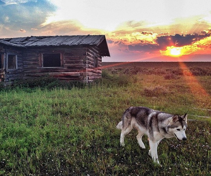 """Loki at a country getaway. **PHOTO CREDIT: [Instagram/loki_the_wolfdog](https://instagram.com/loki_the_wolfdog/ target=""""_blank"""")**"""