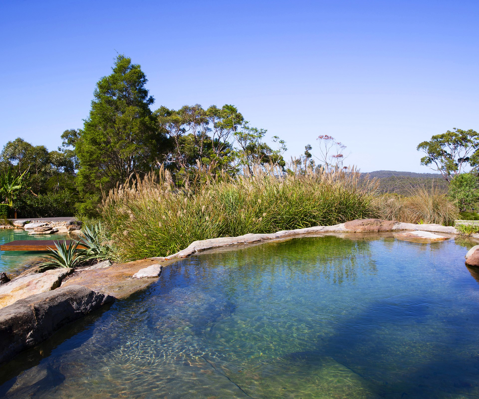 "Have you heard of natural swimming pools? This type of pool is rapidly increasing in popularity and requires absolutely no chlorine or toxic chemicals. The water is naturally cleaned by aquatic plants and microorganisms! You can see one in action in [Laurie and Christine's garden](http://www.homestolove.com.au/laurie-and-christines-natural-swimming-pool-and-native-garden-1909/|target=""_blank""). Photo: Jason Busch / *Australian House & Garden*"