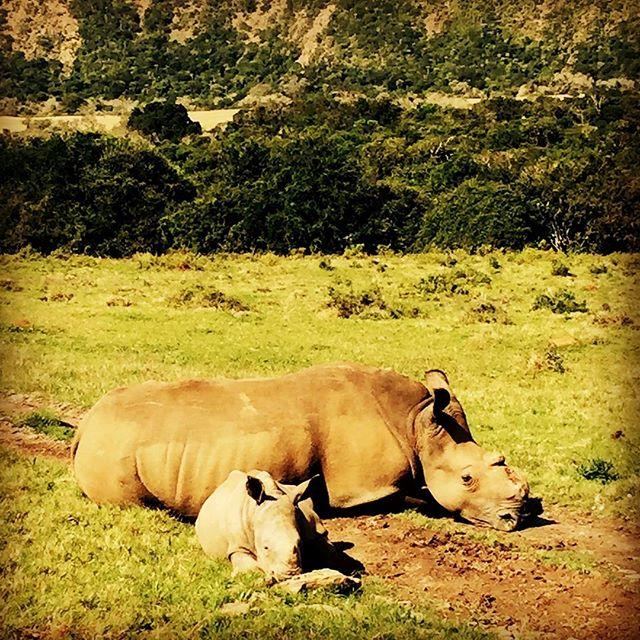 """""""A female rhino who had her horn hacked off by poachers in 2012. She now has a baby calf called Thembi."""""""