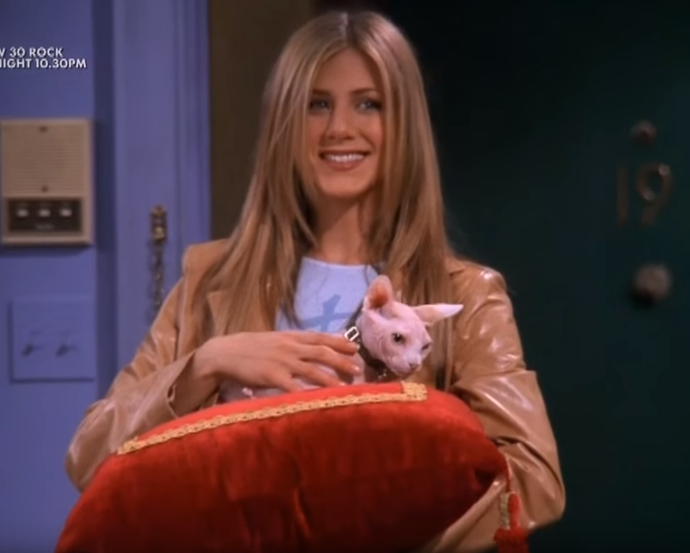 "*The One With The Ball*. Rachel buys a $1000-Sphinx cat who turns out to be completely psychotic. Ross says what we're all thinking: ""Why is it inside out?"""