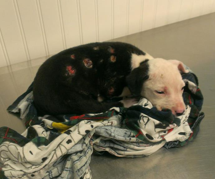"""""""Jake was rescued from a burning shed by a local firefighter. He was abandoned by his family at the vet shortly after."""""""