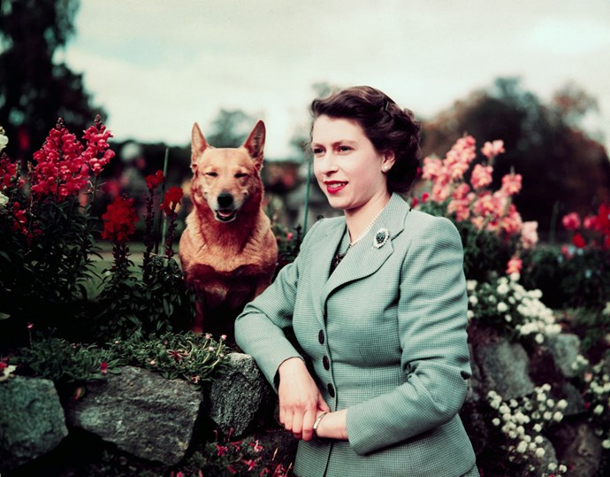 March,1953: Queen Elizabeth II in the garden with her dog.
