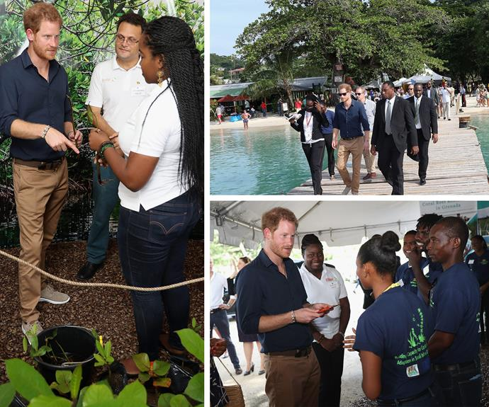 The royal tour is certainly keeping Harry very busy.