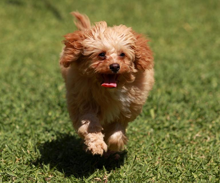 Uncommon Dog Names You Probably Hadn't Thought About