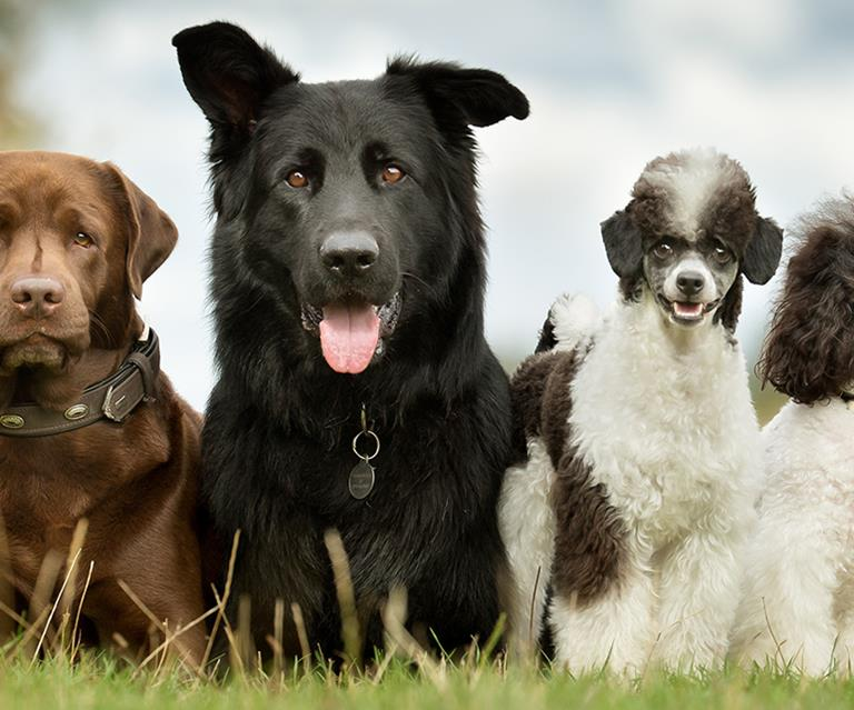 Uncommon Dog Names You Probably Hadn't Thought About | Australian