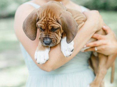This bride switched out bouquets for rescue puppies in her wedding photos
