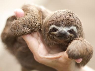 BREAKING: Sloths can swim, just ask your pal David Attenborough