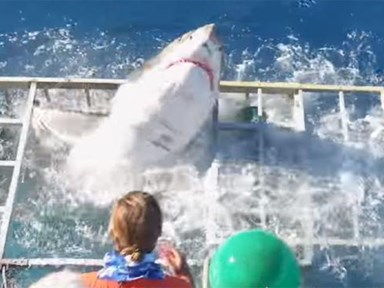 Great white shark breaches cage with diver in it and HOLY NOPE
