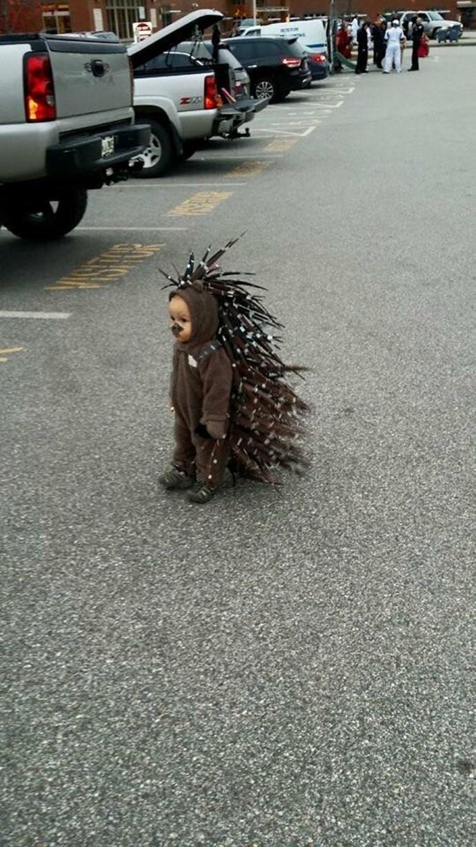 ** 6. Sad porcupine**