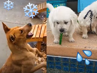 8 clips of woofers doing things for the first time to make your day less crap