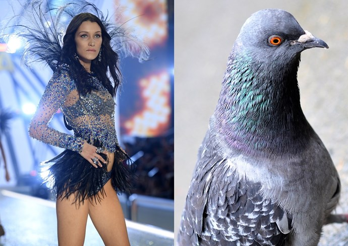"""**1. A sad pigeon** Why is Bella [so pouty](http://www.cosmopolitan.com/entertainment/celebs/a8384450/bella-hadid-the-weeknd-victorias-secret-photos