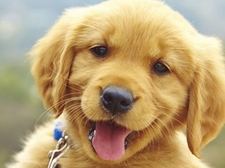 BREAKING CUTE NEWS: Puppies love it when you speak to them in baby talk