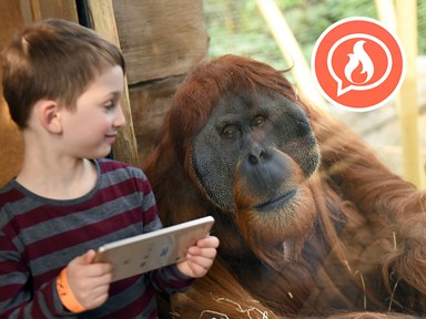 Tinder for orangutans is here to help our primate sisters find true love