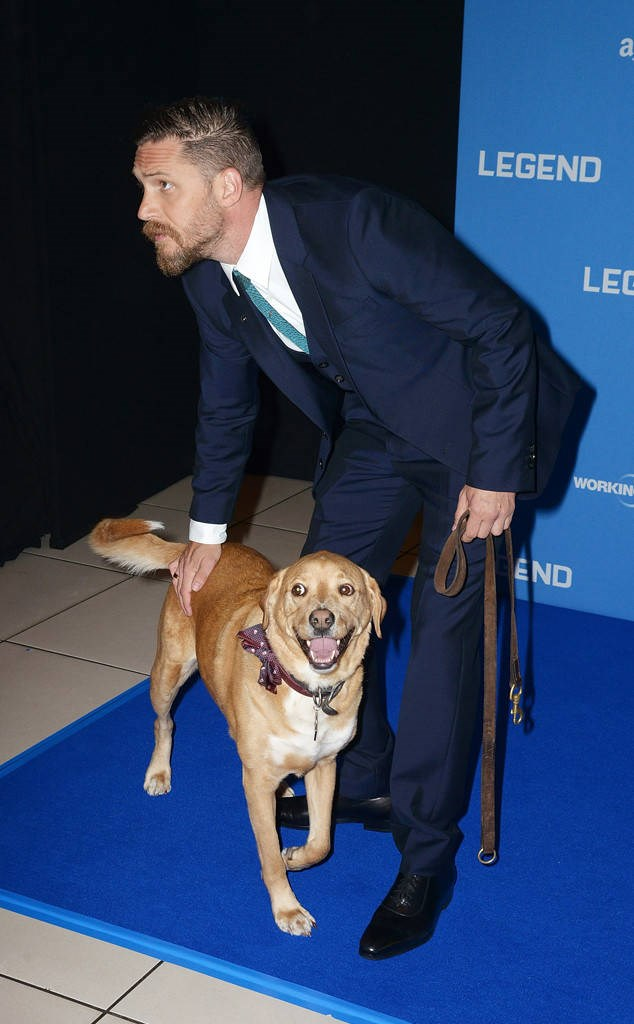 Get a man who looks like Tom Hardy, and takes his dog on the red carpet.