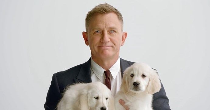 Daniel Craig cuddles up to a pack of puppies in a new advert for Aston Martin and Omaze and it is EVERYTHING.