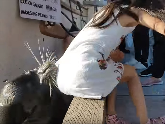 Sea lion drags girl into water