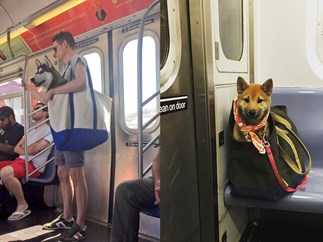 can you bring dogs on the new york city subway