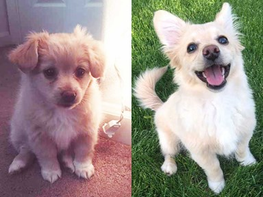 ATTN dog lovers: Pupper to doggo transformations are taking over the internet