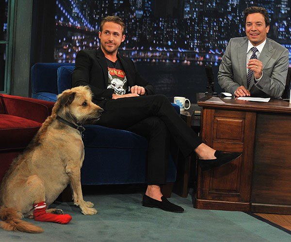 **Ryan Gosling**<br><br>Gosling is a well-documented dog man. He's known for taking his dog, George, everywhere, including on set with Jimmy Kimmel. Last we heard, George was pretty sick in December so we hope he's on the mend.