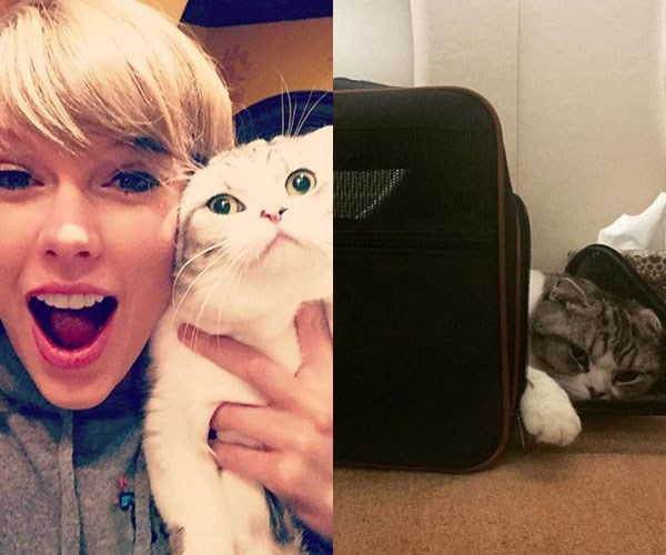 **Taylor Swift**<br><br>Taylor Swift's cats, Meredith and Olivia, are famous in their own right – thanks to her constant Instagrams of the pair. Tay-Tay's followers have been through a lot with her cats. We've seen them go to the vet, lounging about the house, thinking about life and grumpy AF.