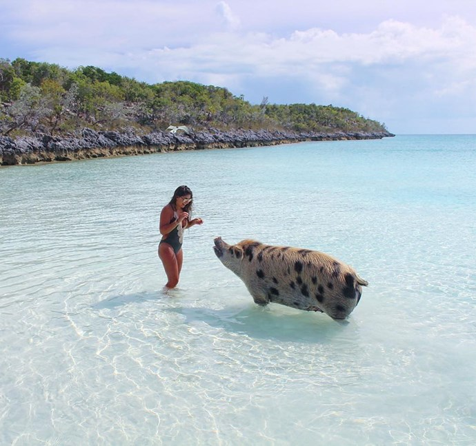 **Pig Beach — The Bahamas** <br> <br> SWIMMING PIGS?! Yes, there is a spot in the Bahamas that is ruled by little piggies who love to splash about in the sea and swim out on occasion. You, too, can frolick with the pink pigs by visiting them at the beach. However, unfortunately, the pigs haven't dealt too well with the influx of humans, with some idiotic tourists giving the pigs booze, leading to their [alcohol-related deaths](http://www.cosmopolitan.com.au/travel/exhuma-swimming-pigs-dead-20911). So, if you travel to the pigs, treat them well and make sure we don't lose this amazing natural phenomenon.  Image: [@pigsofparadise](https://www.instagram.com/p/BXKwOb6A8Zu/?tagged=pigbeach)