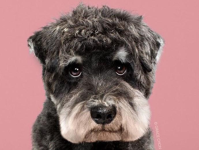 Dog Transformations