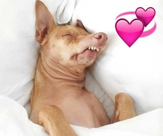 4 ugly-yet-adorable animals to follow on Instagram