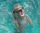Turns out, dolphins are petty af and love talking sh*t about other dolphins