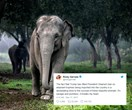 Celebrities are furious over Trump reversing the elephant 'trophies' import ban