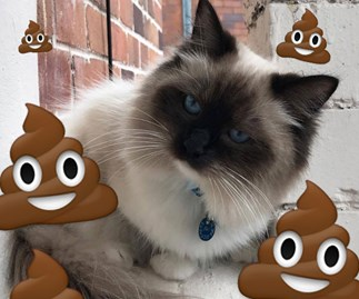 COSMO INVESTIGATES: Why does my cat keep sh*tting on my carpet?
