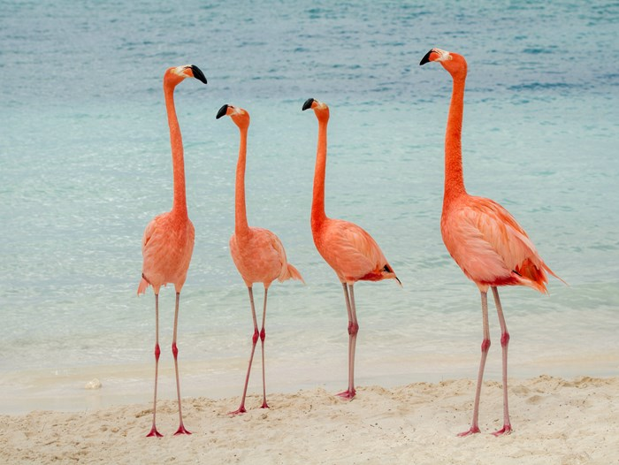 Dream Job Alert: You Can Now Get Paid to Hang Out With Flamingos in the Bahamas
