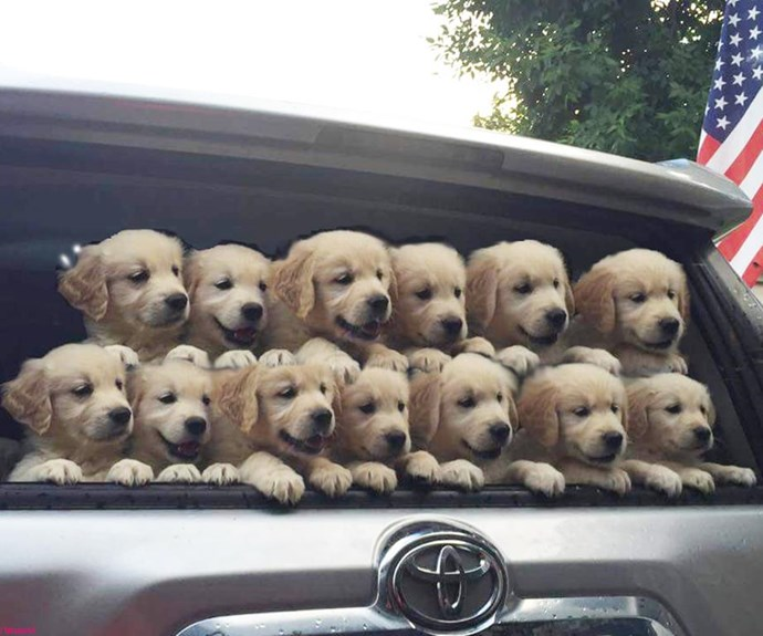 RSPCA $29 pet adoption fees
