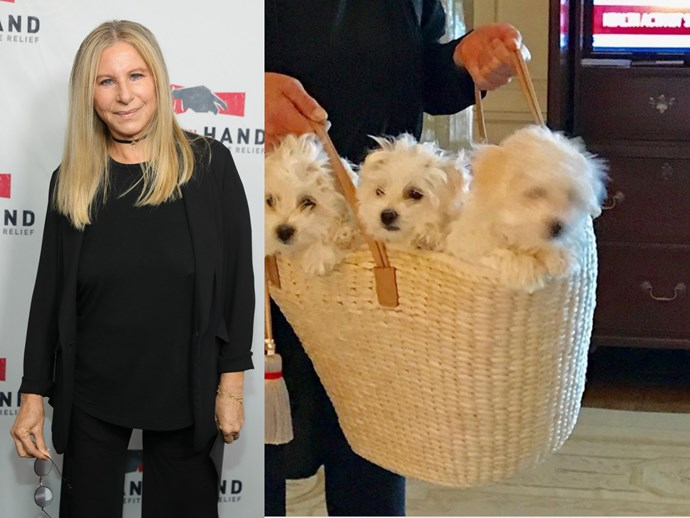 Barbra Streisand cloned her dead dog because she's the kind of person who has a spare 50k