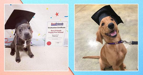 Fantastic Graduation Cap Black Adorable Dog - 1526621725689_social-dogs-graduating-1526565903  Best Photo Reference_671084  .jpg?width\u003d600\u0026height\u003d315\u0026quality\u003d75\u0026mode\u003dcrop