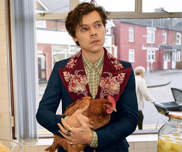harry style gucci chicken