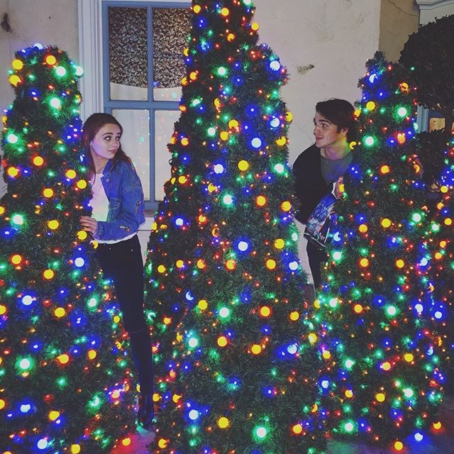 "Here they are playing hide 'n' seek around the Christmas trees. <br><br> Image: [@joeyking](https://www.instagram.com/joeyking/|target=""_blank""
