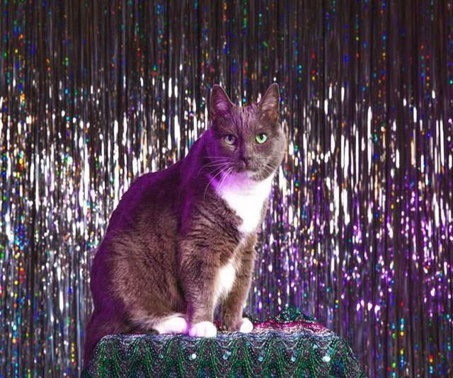 In defense of cats — the internet's fallen heroes