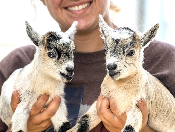 Wholesome content coming at ya: Goats like it when you smile at them