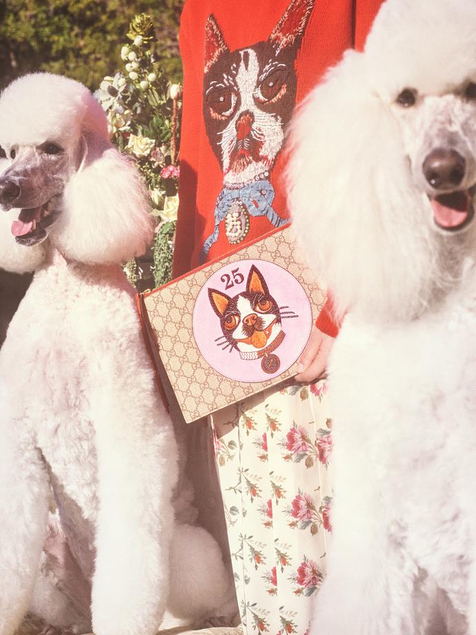 The new dog motifs were inspired by a pillow that the artist Helen Downie, AKA Unskilled Worker, gave to Alessandro Michele which featured an illustration of his two Boston terriers, Bosco and Orso.