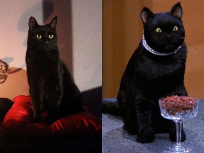 **SALEM SABERHAGEN** <br>  While the OG Salem was a wise-cracking, sarcasm-ridden family pet—played by what was most likely either a taxidermied cat or a pretty life-like cat puppet —the next-gen Salem looks to be set to be a little more mute. <br><br> With no acting credits listed under the cat's moniker, we're guessing the witty exchanges will sadly be non-existent.