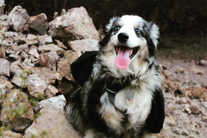 "Last—but certainly not least—is Cash. Terra Newell's beautiful Australian Shepherd is one of the breakout stars from the original podcast thanks to his loyal spirit and devotion to his owner. Best of all? Cash has his own Instagram account [@cashmoneythepuppy](https://www.instagram.com/cashmoneythepuppy/|target=""_blank""