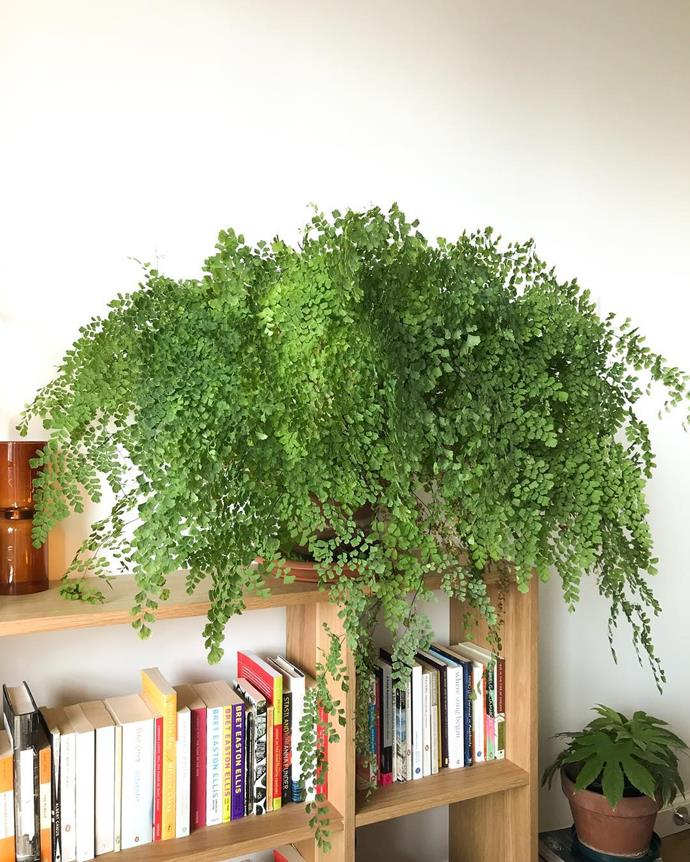 "***Your steamy high-use bathroom***<br><br> Although many are afraid of putting plants in bathrooms as the air humidity fluctuates constantly, there are lots of plants that love it.<bR><br> Try an adiantum or ""maiden-hair fern."" Tip: ""Keep it sitting in a shallow water-filled drip tray to keep it happy.""<br><br> Image via [@minstera_](https://www.instagram.com/p/BtiaX9ygNzp/